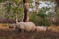One-horned Rhinoceros and young, Kaziranga National Park, India Fine Art Print