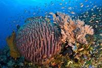 Marine Life Fine Art Print