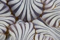 Sea anemone, Marine life Fine Art Print