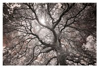 Ethereal Tree Fine Art Print