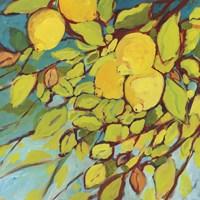 The Lemons Above Fine Art Print