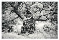 Portrait of a Tree, Study 1 Fine Art Print