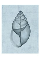 Achatina Shell (light blue) Fine Art Print
