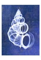 Wentletrap Shell (indigo) Framed Print