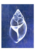 Achatina Shell (indigo) Framed Print