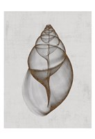 Achatina Shell Fine Art Print