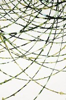 Moss Vine Fine Art Print