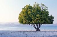 Asia, Indonesia, Lesser Sunda Archipelago, Beach Fine Art Print