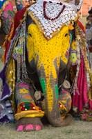 Elephant Festival, Jaipur, Rajasthan, India Framed Print