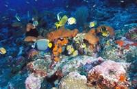 Coral Reefs, Papua, Indonesia Fine Art Print