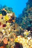 Healthy Reef, Komodo, Indonesia Fine Art Print