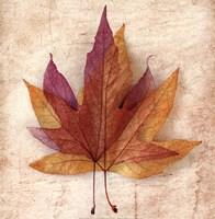 Solstice III Fine Art Print