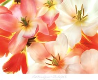 Tulips 2 Fine Art Print