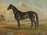 America's Renowned Stallions, c. 1876 II Fine Art Print