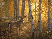 Whitetail in Aspens Framed Print