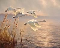 Elegant Migration Fine Art Print
