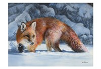 Fox at the Pines Fine Art Print