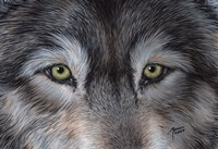 Eyes of the Wolf Fine Art Print