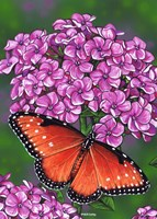 Queen Butterfly Fine Art Print