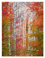 Autumn Passage Fine Art Print