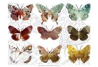 Layered Butterflies II Fine Art Print