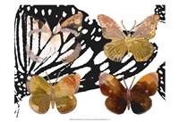 Layered Butterflies III Framed Print