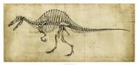 Spinosaurus Study Framed Print