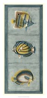 Tropical Fish Trio I Framed Print