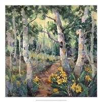 Four Seasons Aspens II Fine Art Print