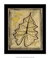 Leaf Panel II Framed Print
