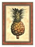 Pineapple Splendor I Framed Print