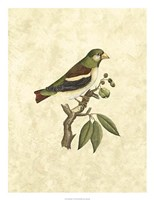 Selby Birds V Fine Art Print