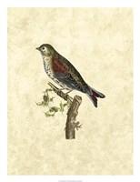 Selby Birds VI Fine Art Print
