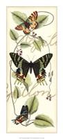 Butterfly Flight II Framed Print