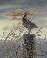 Quail on a Post Fine Art Print