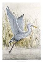 Heron Sanctuary I Framed Print