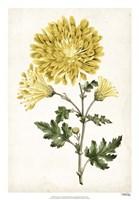Floral Lace IV Fine Art Print