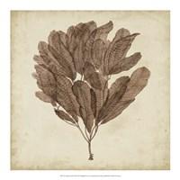 Vintage Seaweed III Fine Art Print