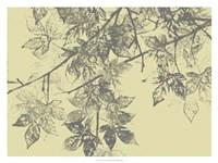 Grey Leaves II Framed Print