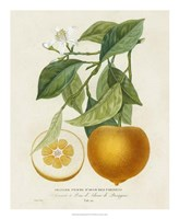 French Orange Botanical I Framed Print