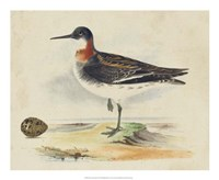 Meyer Shorebirds II Fine Art Print