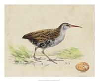 Meyer Shorebirds III Fine Art Print