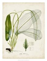 Tropical Grass II Framed Print