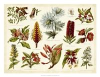 Tropical Botany Chart I Fine Art Print