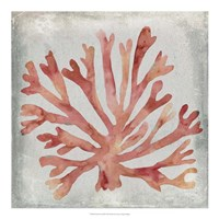 Watercolor Coral III Fine Art Print