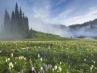 Mt. Rainier Wildflowers Fine Art Print