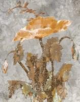 Spice Poppy II Fine Art Print