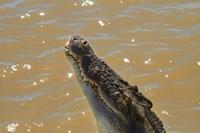 Jumping Crocodile Cruise, Adelaide River, Australia Fine Art Print