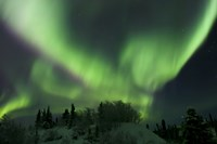 Aurora Borealis Takes Flight Fine Art Print