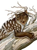 Thylacoleo, a Marsupial Lion from the Pleistocene Age Fine Art Print
